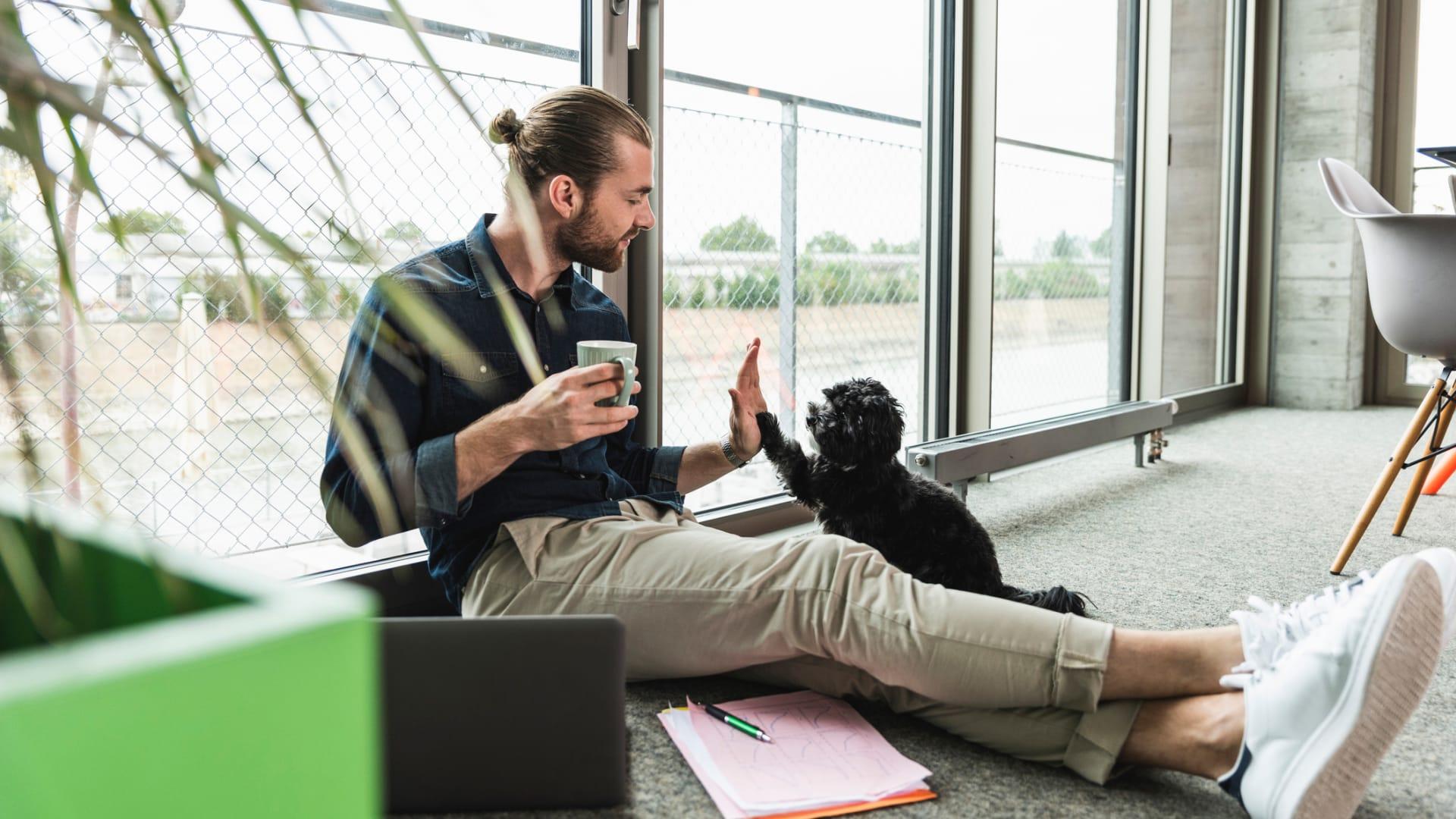 Pet Perks at America's Dog-Friendliest Companies Have Gotten Even Cushier