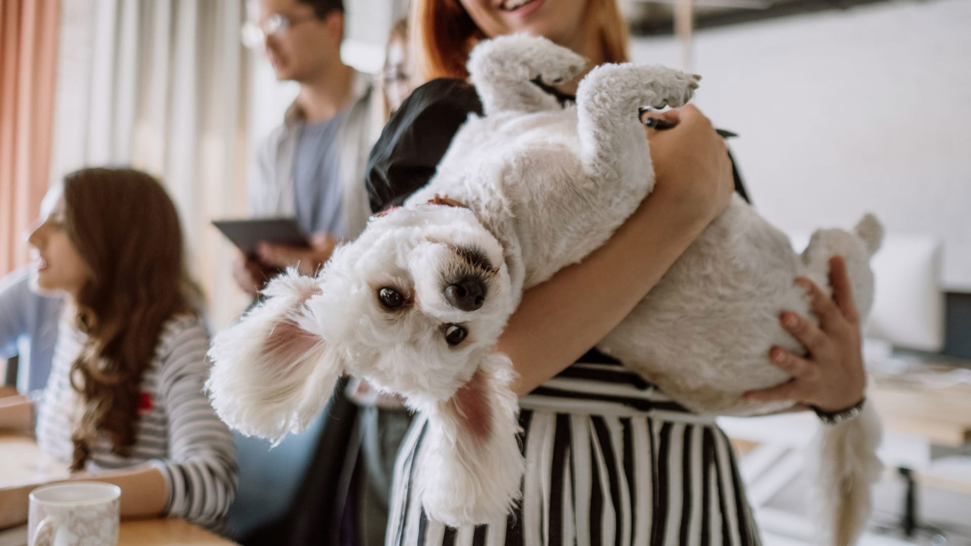 A Lot More Post-Pandemic Offices Are Going to Be Pet Friendly, New Survey Says