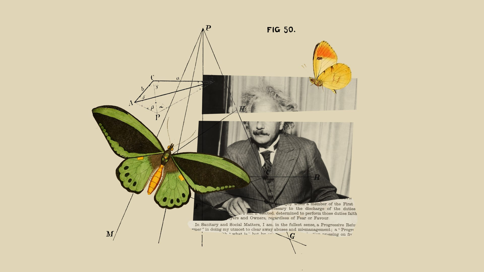 Why You Want to Be a Butterfly, Not a Genius