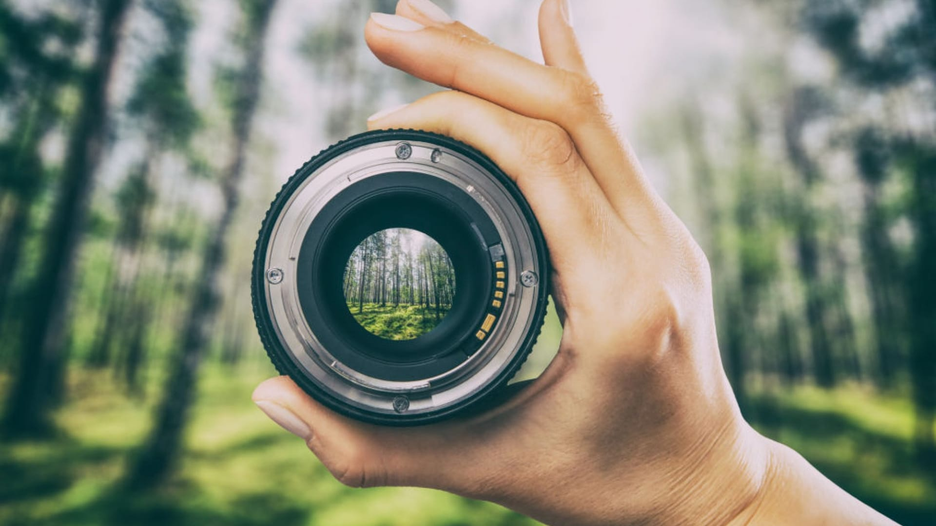Why Intelligent Minds Embrace the Rule of Focus