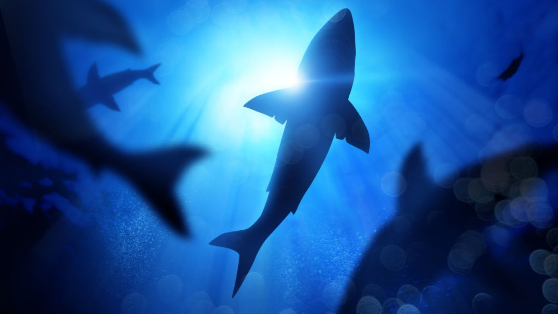 How to Decide Whether to Fish for Sharks or Hunt for Angels