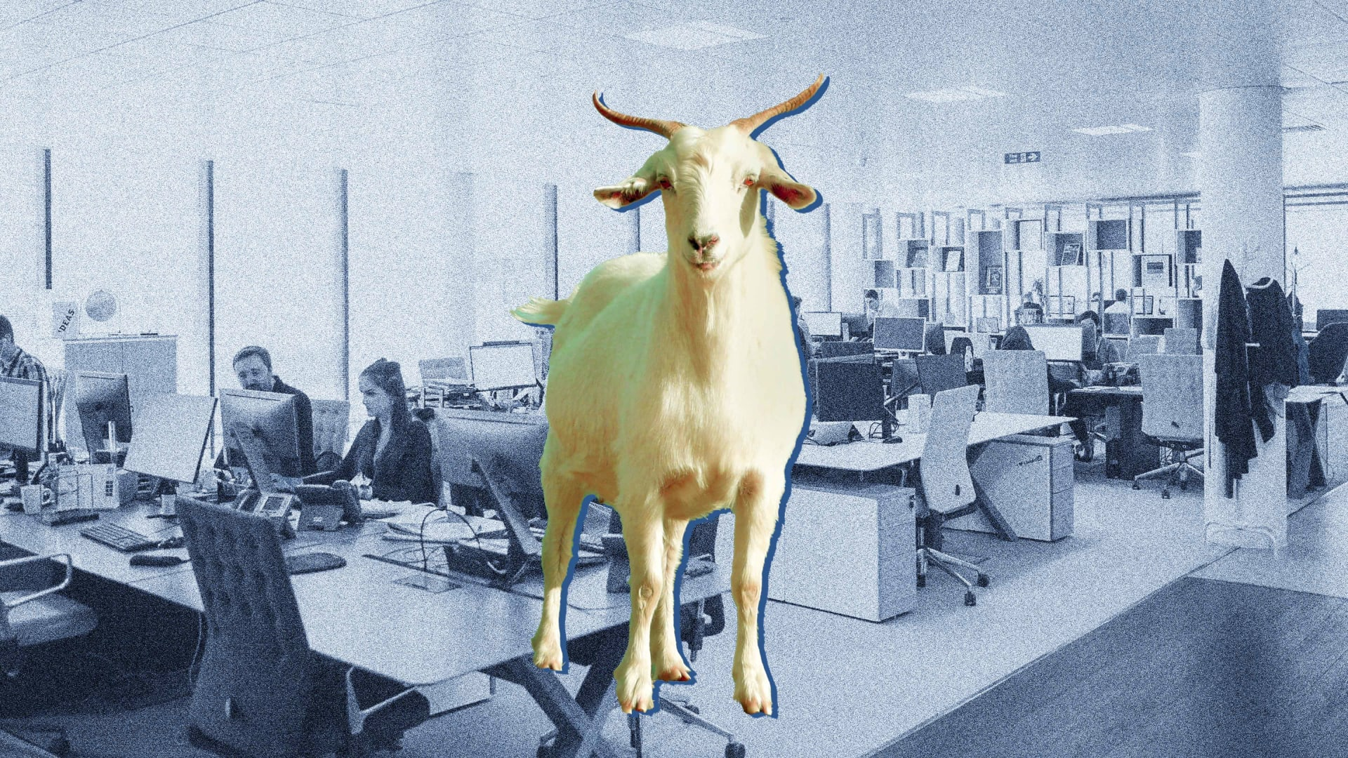 What Happened When the Owner of the Phoenix Suns Put Live Goats in an Employee's Office
